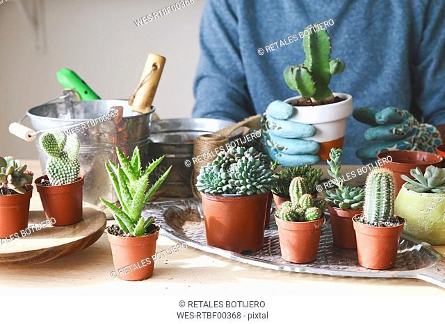 Young man transplanting cactus on wooden table
