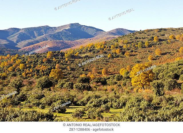 Macizo del Pico del Lobo, Parque Natural Sierra Norte de Guadalajara, El Cardoso de la Sierra, Guadalajara, Spain