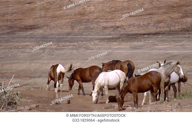 Navajo horses running loose in Canyon de Chelly, Arizona, USA