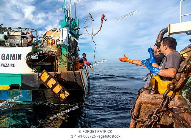 BOARDING BETWEEN TWO BOATS TO TRANSPORT THE LIVE SHRIMPS TO THE WHOLESALE FISH MARKET, SEA FISHING ON A SHRIMP trawler, the 'QUENTIN-GREGOIRE' and 'LE GAMIN'...