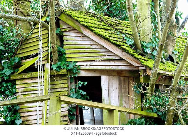A moss covered tree house on the bank of the Oxford Canal near Lower Heyford, Oxfordshire