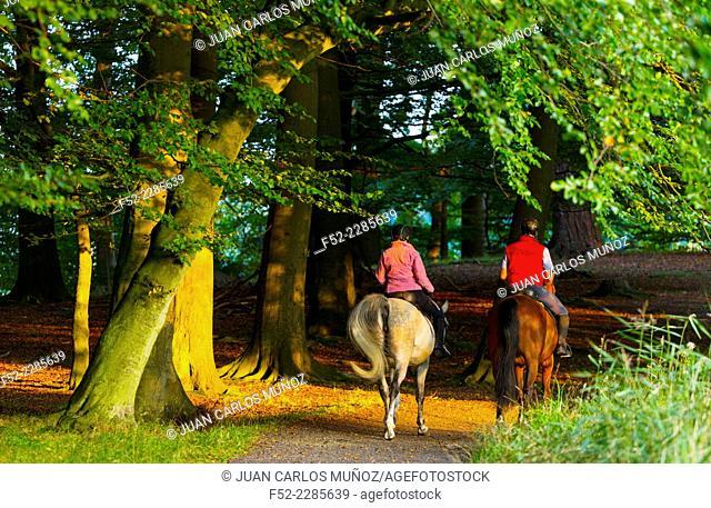 Horses, Dyrehaven, Denmark, Europe