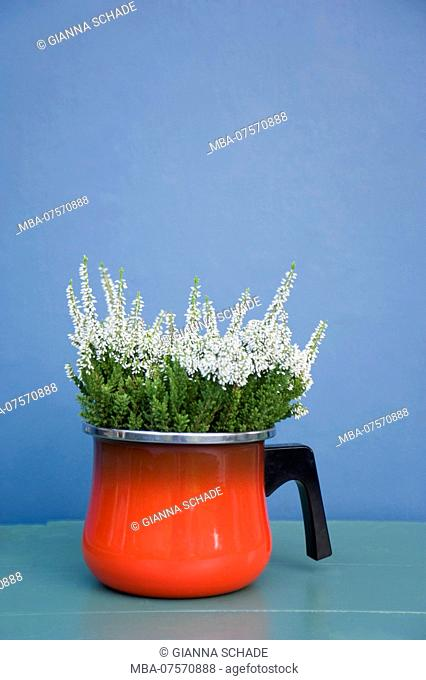 Retro props, Calluna vulgaris in old pot