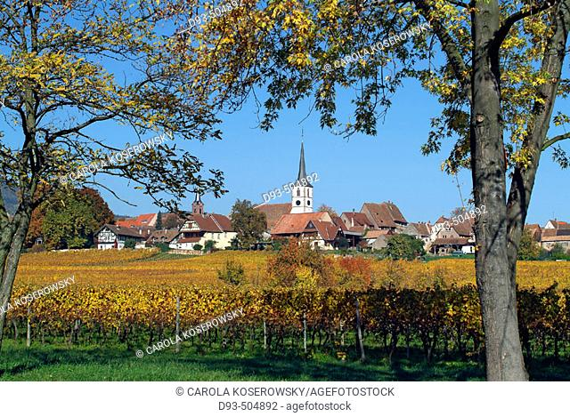 Mittelbergheim. Alsatian Wine Road. France