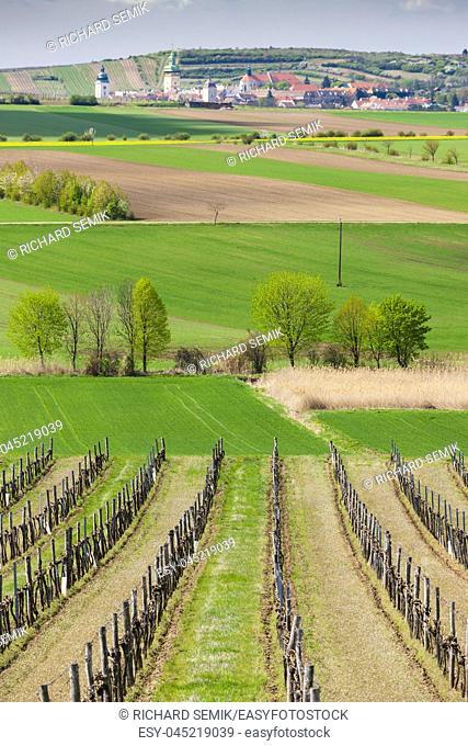 spring vineyard near Retz, Austria