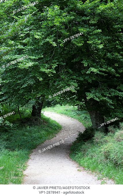 A path goes into the natural space of Covalagua. Las Loras World Geopark. UNESCO Global Geopark. Palencia. Castilla y León. Spain