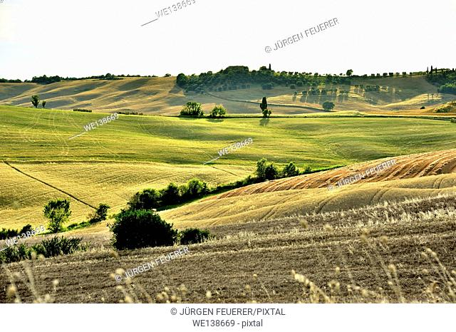 Rolling hills of different colours in soft light, Tuscany, Italy