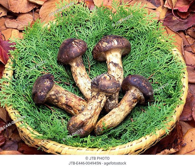Matsutake Mushroom Colander Fallen leaves Food