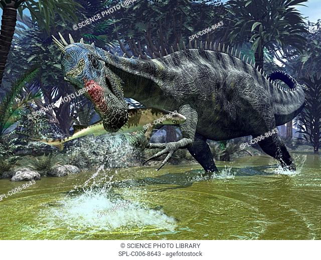 Suchomimus dinosaur. Artwork of a Suchomimus dinosaur catching a shark. This dinosaur lived 112 million years ago in what is now the Sahara region of Africa