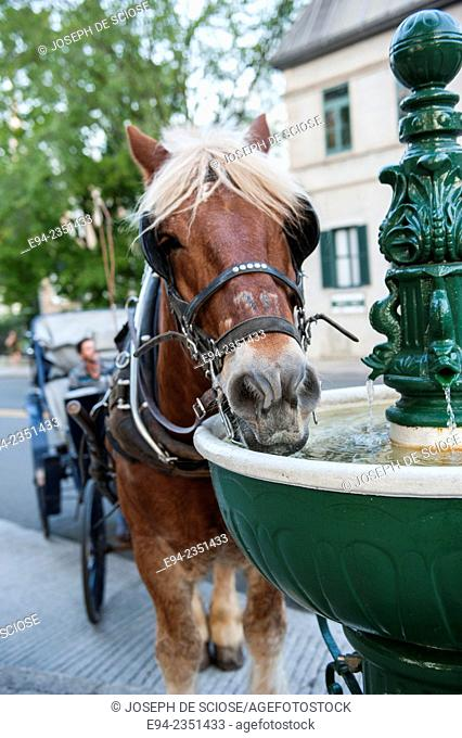 A carriage horse drinks out of a special fountain in Quebec City, Canada
