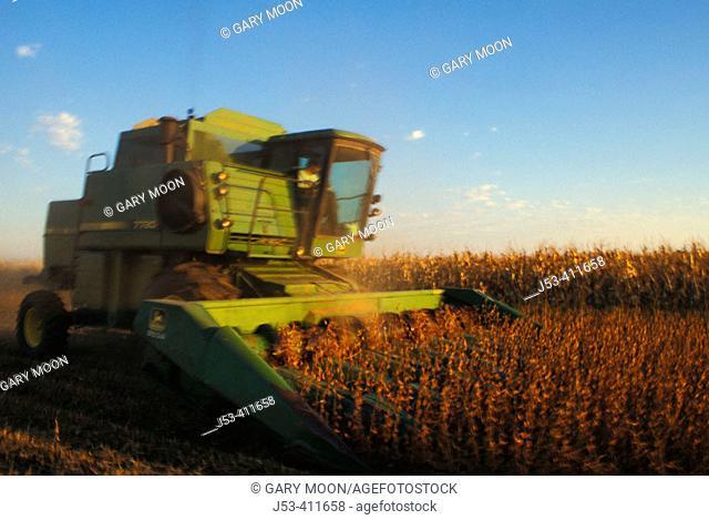 Harvesting milo. Nebraska. USA