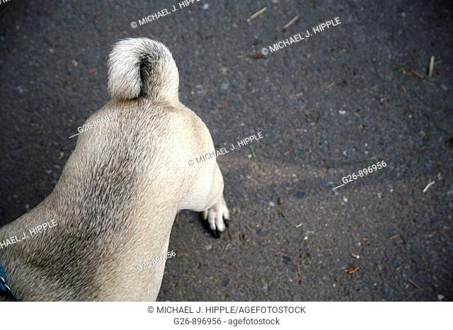 Rear view of dog