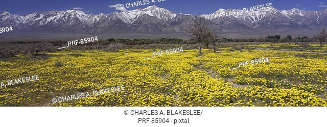 Mt Williamson Sierra Nevada Mountain Range CA