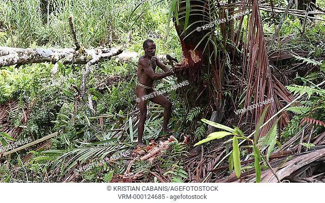 Kombai man cutting a tree, Papua, Indonesia, Southeast Asia