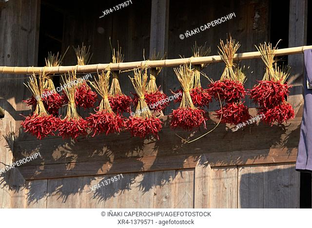 Chillies drying in the air, Around Rongjiang, Rongjiang, Guizhou, China