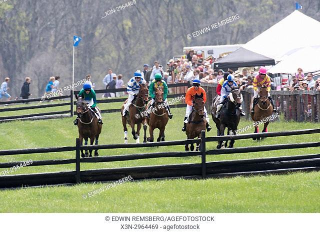Race horses barrel towards a hurdle in Monkton Maryland USA
