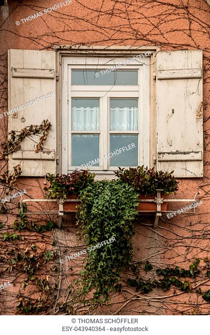 Old house with ivy and white shutters