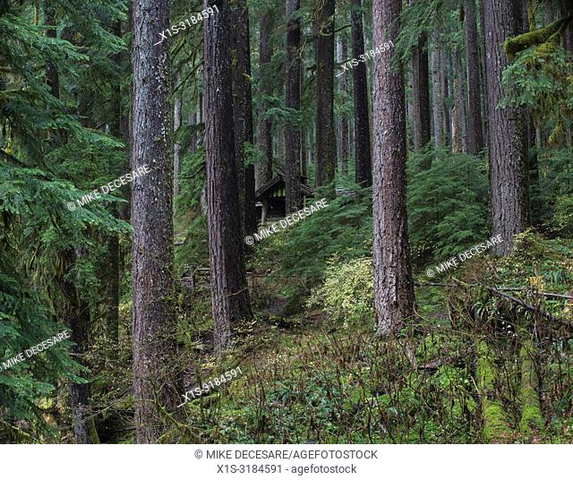 A forest trail in Olympic National Park in Washington leads to a spectacular Sol Duc Waterfall