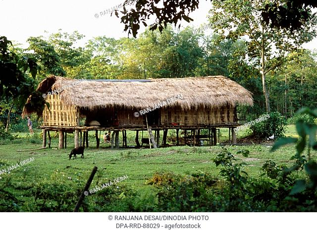 House of Bamboo stilts , Majuli , Assam , India