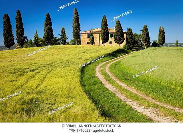 Drive leading to country villa near Pienza, Tuscany Italy