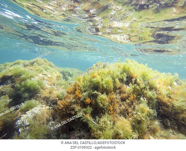 Underwater image Las Rotas San Antonio cape nature reserve Denia Alicante. Spain