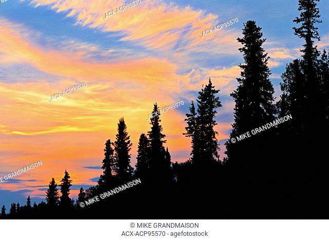 Trees at sunset on the Stewart-Cassiar Highway Iskut British Columbia Canada