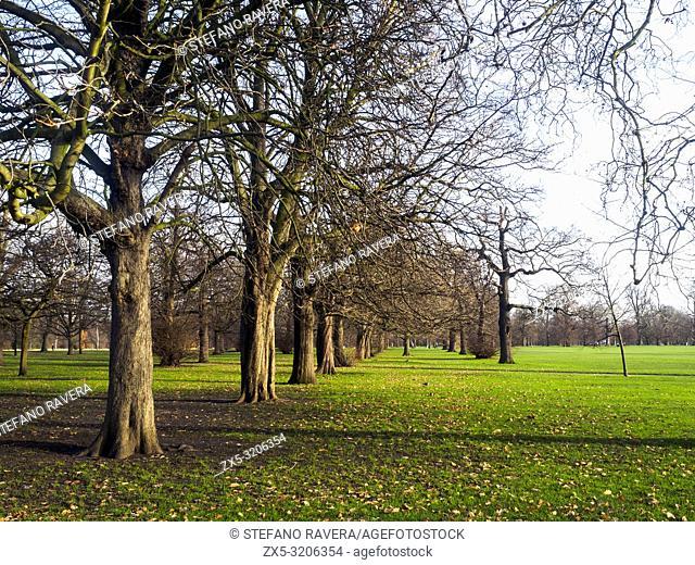 Trees in Kensington gardens - London, England