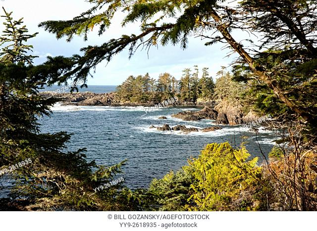 Wild Pacific Trail - Ucluelet, Vancouver Island, British Columbia, Canada