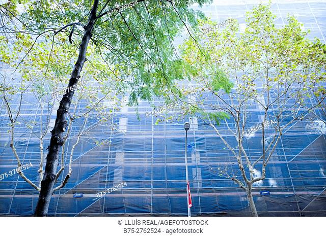 Low angle view of trees and scaffolding. Barcelona, Catalonia, Spain