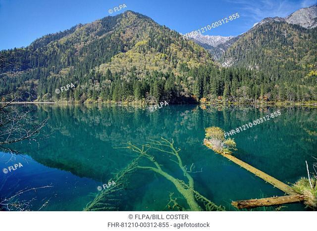 View of submerged tree trunks in clear lake, Arrow Bamboo Lake, Rize Valley, Jiuzhaigou N.P., Min Mountains, Aba Tibetan Qiang Autonomous Prefecture