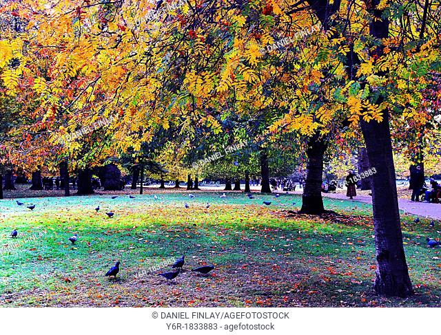Visitors enjoy the Autumn/ Fall colours in St  James's Park, London, England on a fine day