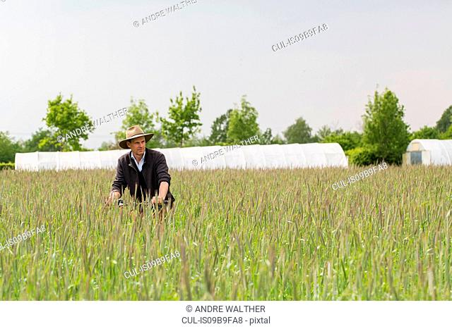 Farmer quality checking crops in field