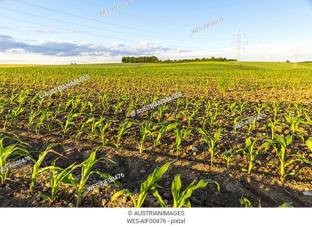 Austria, Innviertel, field with plants