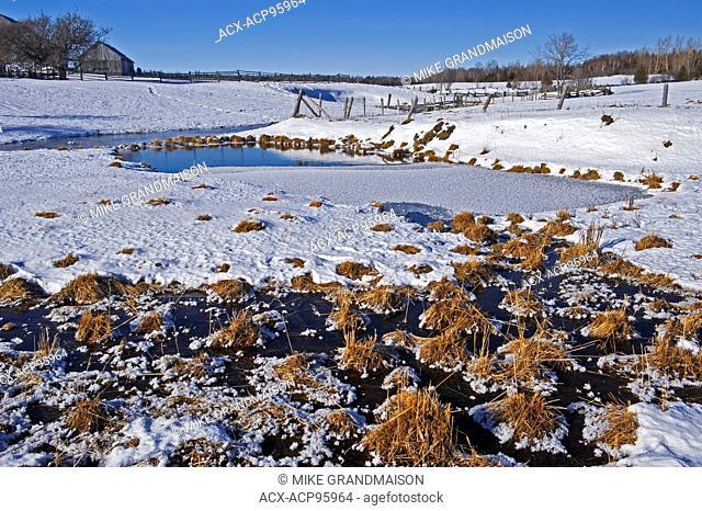 Wetland in winter. Sheguindah. Manitoulin Island Ontario Canada