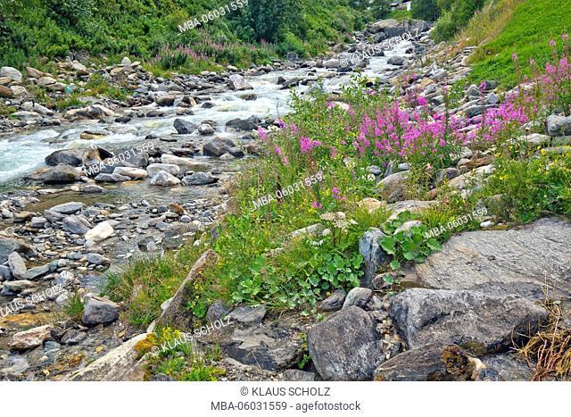 Mountain brook scenery