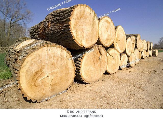Tree-trunks, poplars, fells