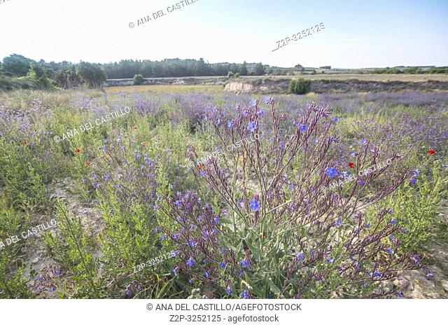 Spring fields in La Costera county Valencian community Spain