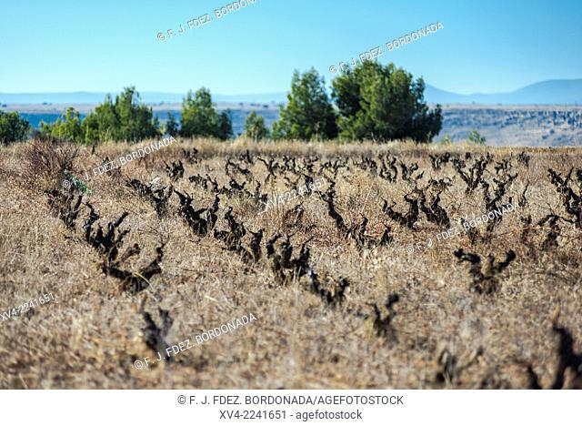 Calatayud vineyard winter scenic area. Aragon, Spain