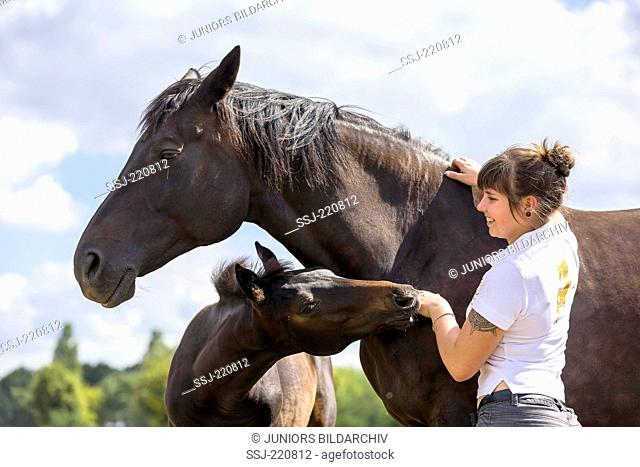 Warmblood Horse. Woman fondling bay mare and foal. Germany