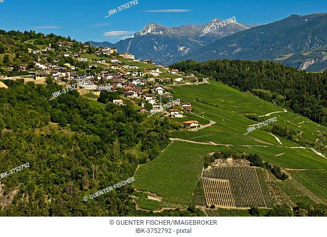 Cultivated landscape with vineyards, Savièse, Canton of Valais, Switzerland