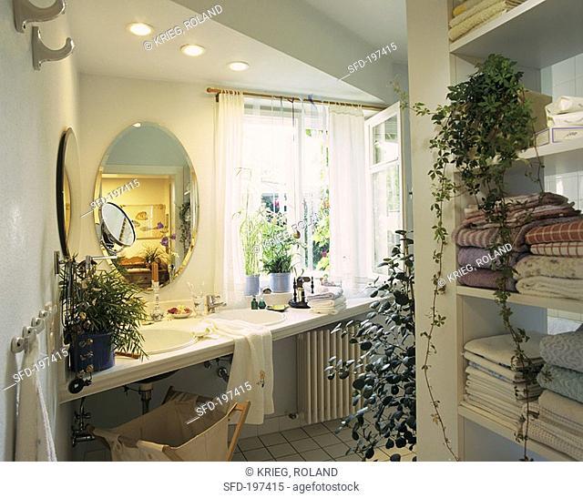 Green oasis in bath, Cissus, Mistletoe fig, Umbrella plant etc