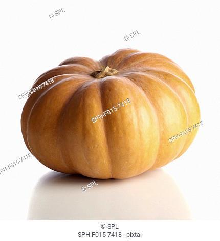 Cinderella pumpkin (Cucurbita moschata), studio shot