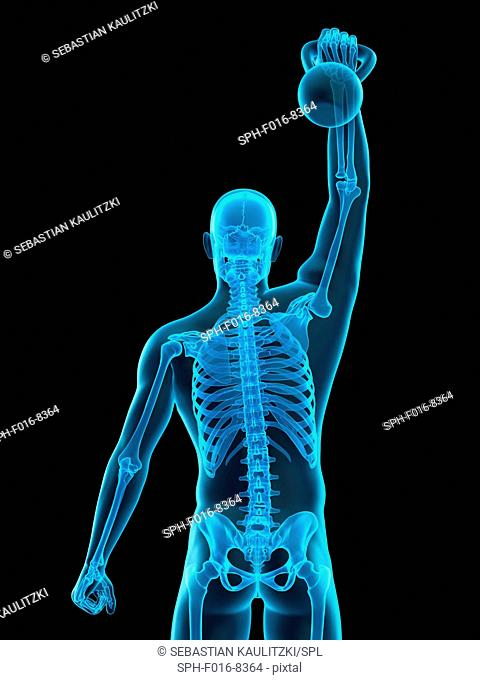 Skeletal structure of person lifting kettle bell, illustration