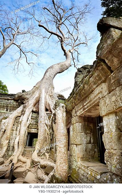 Angkor - tangle of roots of overgrowing ruins of the Ta Prohm Temple, Angkor Temples Complex, Siem Reap Province, Cambodia, Asia