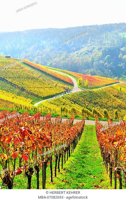 Vineyards in autumn, Baden-Wurttemberg, Germany