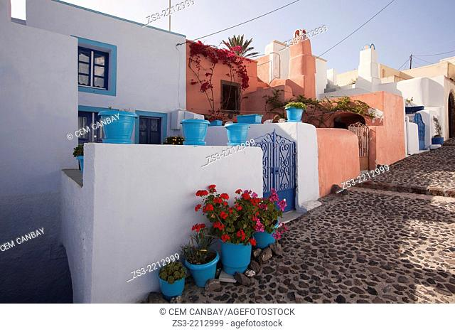Colorful houses with geranium pots in Pyrgos, Santorini, Cyclades Islands, Greek Islands, Greece, Europe