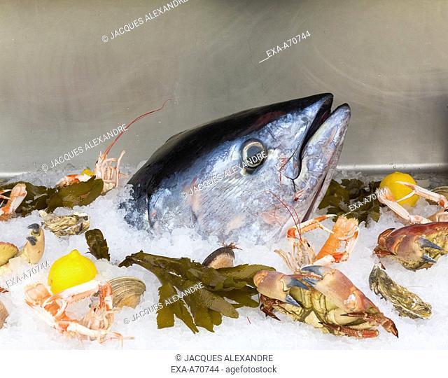seafood presentation