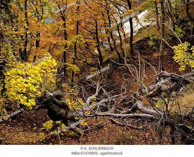 Europe, Germany, Mecklenburg-Western Pomerania, Island of Rügen, Jasmund National Park, UNESCO World Natural Heritage European beech forests