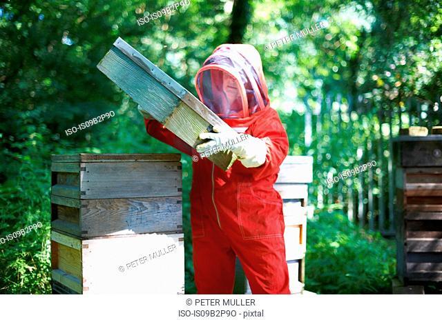 Beekeeper lifting hive lid