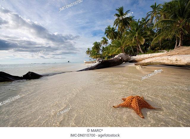 Panama, San Blas islands, comarca Kuna Yala, sea-star